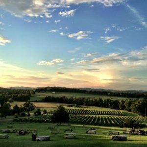 arrington-vineyards